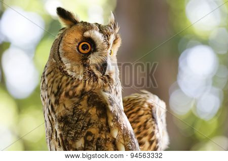 Owl Against A Blurred Background