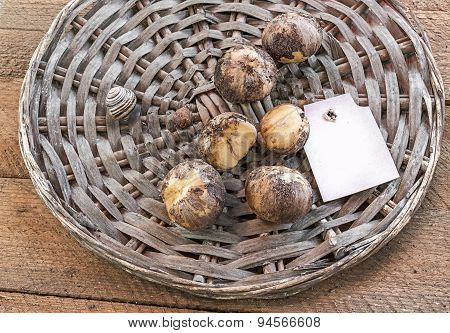 Bulbs of Decorative Onion On A Wooden Table