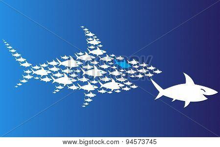 pack of sharks pursues big shark.