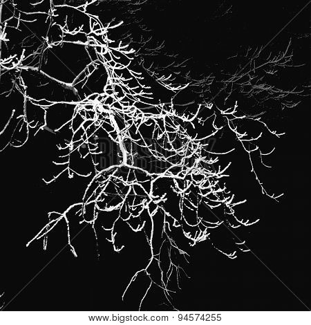 Oak tree branches winter night silhouette, vector