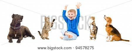 Group of a pets and happy child