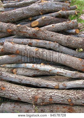 A stack of firewood of holm oaks