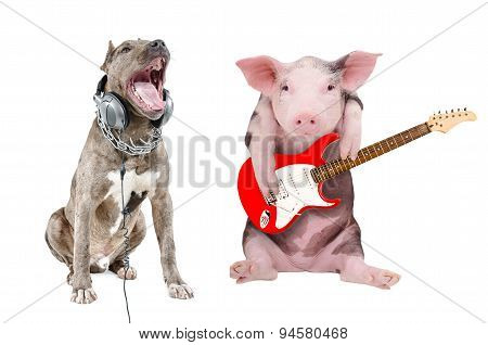 Singing a pit bull in the headphones and a pig plays guitar