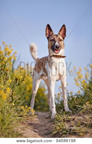 Domestic Dog And Yellow Flowers.