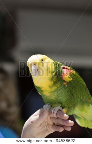 Green And Yellow Parrot At A Community Gathering