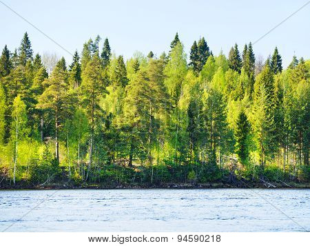 Forest on Rivershore