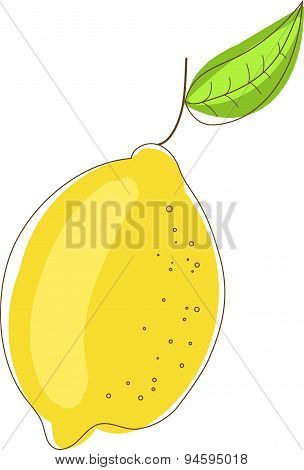 Hand drawn line lemon with leaves on branch white background. Vector illustration of citrus isolated