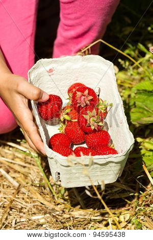 Close-up Of Box With Fresh Strawberries