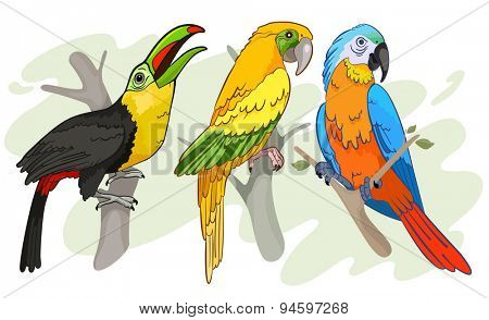 Tropical Birds vector Illustration