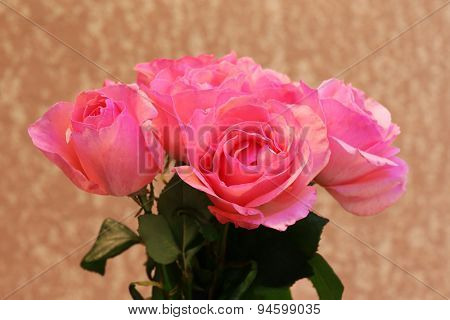 Beautiful pink roses, closeup