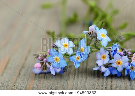 Forget-me-nots flowers on wooden background