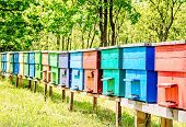 picture of beehives  - Row of colorful wooden beehives with trees in the background - JPG