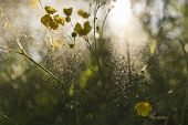 foto of buttercup  - wallpaper of meadow buttercups with sunshine shallow dof and flying water particle - JPG