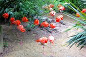 picture of zoo  - sea of flamingos resting at zoo in florida - JPG