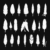 image of feathers  - Collection of vector silhouette feathers - JPG