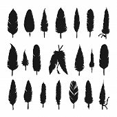 picture of feathers  - Collection of vector silhouette feathers - JPG