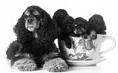 image of puppies mother dog  - litter of puppies  - JPG