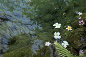 pic of lichenes  - Lichen flower water fern near the water - JPG