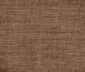 stock photo of tangelo  - Dark brown - JPG