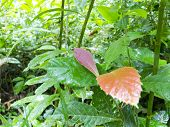image of jungle  - Misty jungle rainforest scene - JPG