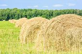 stock photo of hay bale  - Round bales of hay in the field - JPG