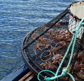 image of pyramid shape  - Opilio crab caught in a heavy steel pyramid shaped trap - JPG