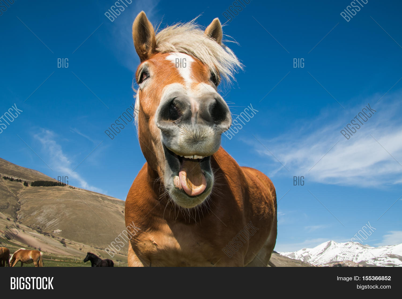 Uncategorized Smiling Horse funny portrait smiling horse image photo bigstock of against the blue sky
