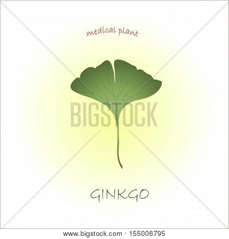 Typography banner with tipping Ginkgo, medical plant, green hand drawn cannabis leaf vector illustration