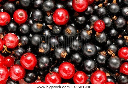 red currant and  blackcurrant