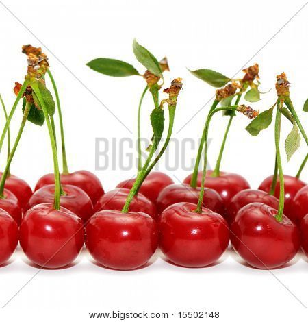 cherries isolated on a white background