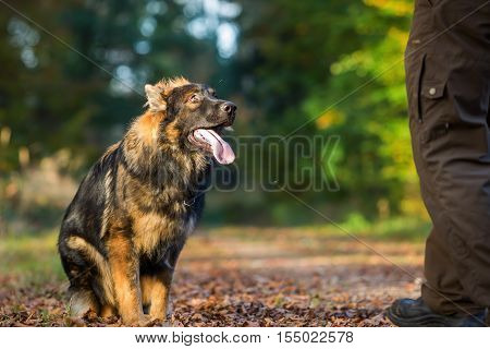 Submissive Young Dog Sitting In The Forest