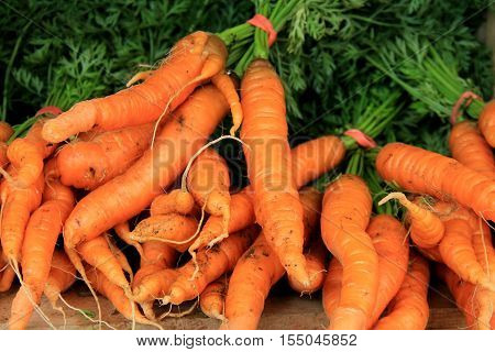 Several bunches of fresh-picked carrots on table at farmers market.