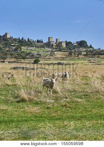 Skyline of Trujillo in Caceres with a two sheeps in foreground. Extremadura Spain.