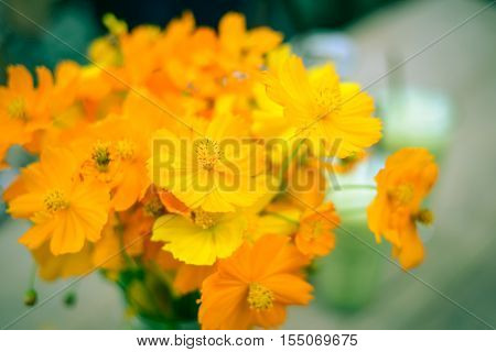 Beautiful flowers in vase - Stock Photo