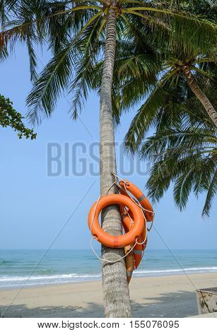 Life Buoy On Coconut Tree.