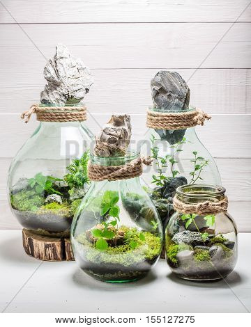Beautiful Live Plants In A Jar As New Life Concept