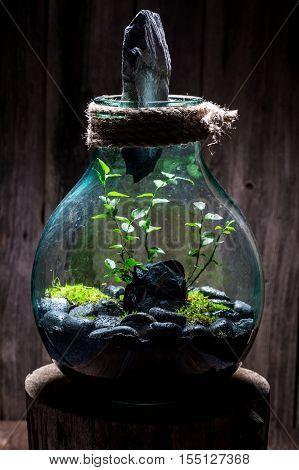 Stunning Live Plants In A Jar, Save The Earth Idea