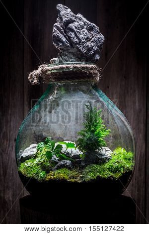Beautiful Live Plants In A Jar, Save The Earth Concept