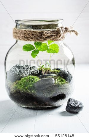 Stunning Jar With Piece Of Forest, Save The Earth Idea