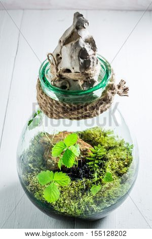 Small Jar With Piece Of Forest, Save The Earth Concept