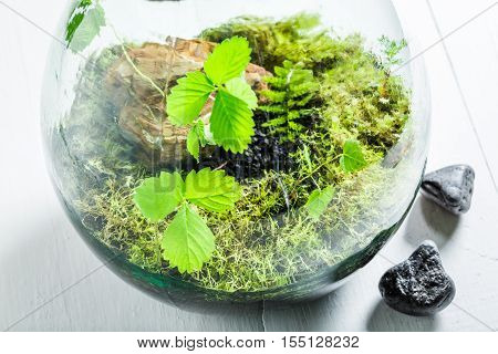 Wonderful Live Plants In A Jar As New Life Concept