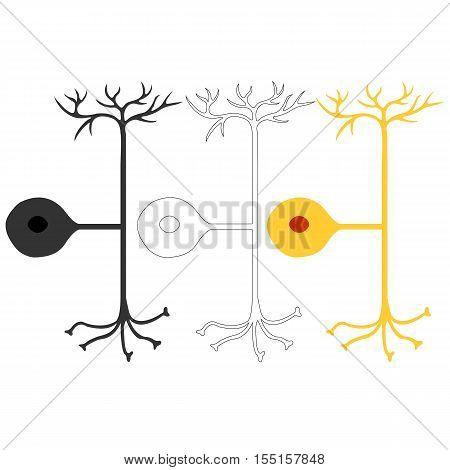 Pseudo-unipolar neuron, nerve cells neurons, isolated on white background