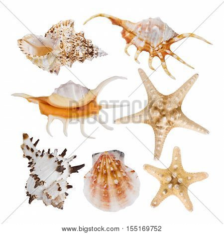 Collage of sea shells isolated on white background