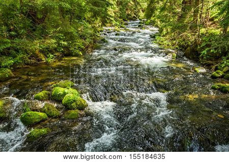 Summer mountain stream in the forest, Poland