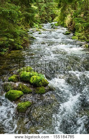 Rushing mountain stream in the forest in summer