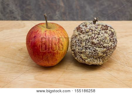 Mould growing on and apple An apple with moulds and fungus growing on it. alongside a fresh apple