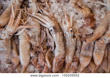 Freshly caught Europian squid fishes or Todarodes sagittatus and ice in the box on the counter at the fish shop. Europian squid fishes calamari background. Horizontal. Top view.