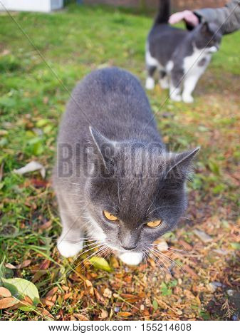 Homeless cats in the autumn lawn with a shallow depth of focus