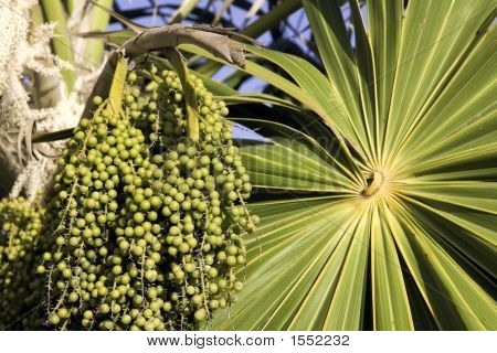 Unripe Acai Berries