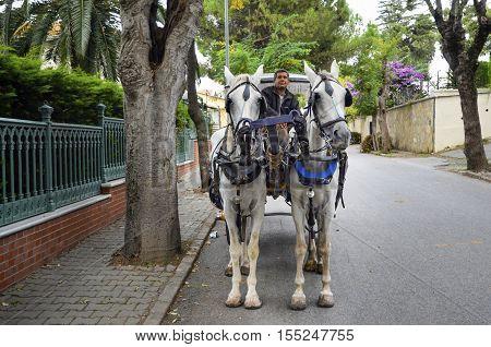 Istanbul Turkey - October 30 2016: In the fall Buyukada Phaeton. Horse Carriage. The symbol of the Islands is the transportation vehicle phaetons. Adalar in Marmara Sea near Istanbul in Buyukada (meaning Big Island in Turkish). This is a neighborhood in t